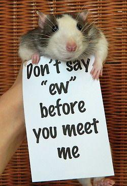 569976b60509d826080eaab8d6f39a38-rodents-hamsters