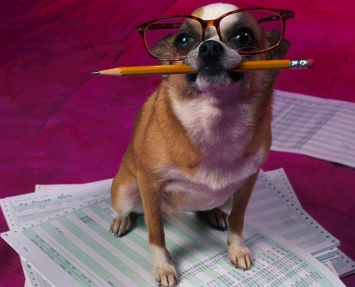 cane-contabile