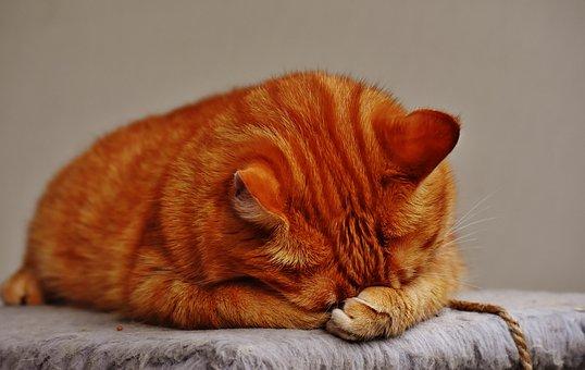 kattenplaatjes1